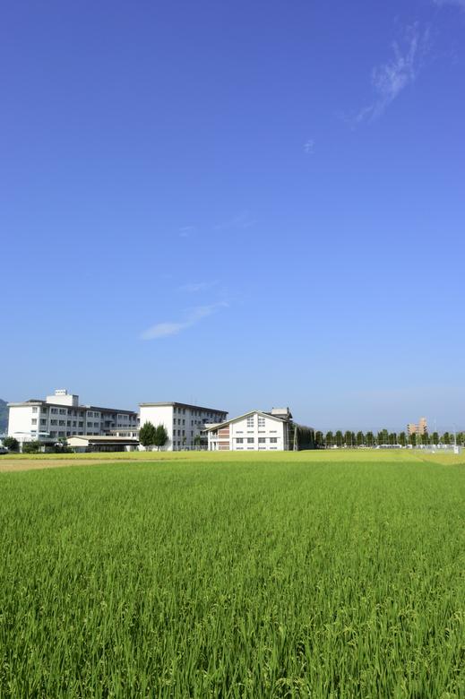 青い空と緑の稲穂