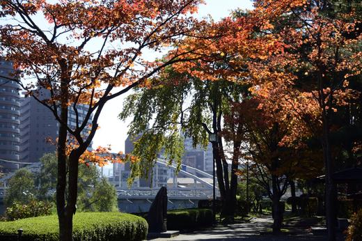 開運橋と紅葉