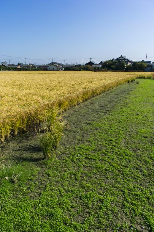 一宮界隈の空と田と草