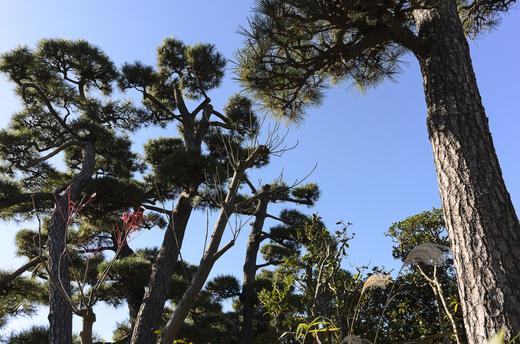 藤沢の秋の空