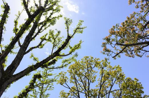 姫路の街路樹