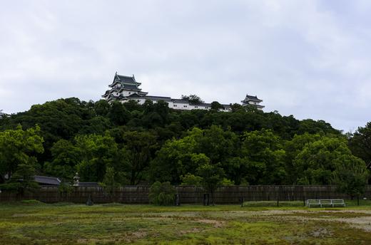 和歌山城を見上げる