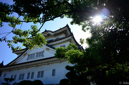 岸和田城を仰ぎ見る