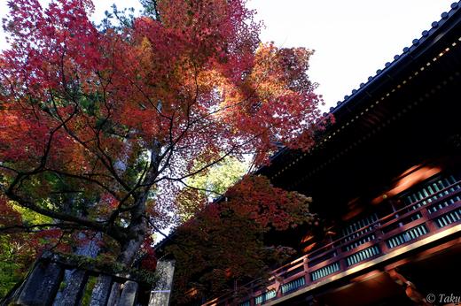 日光山輪王寺護摩堂の紅葉