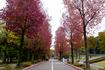 しいのき迎賓館横の紅葉