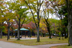 玉川公園の紅葉