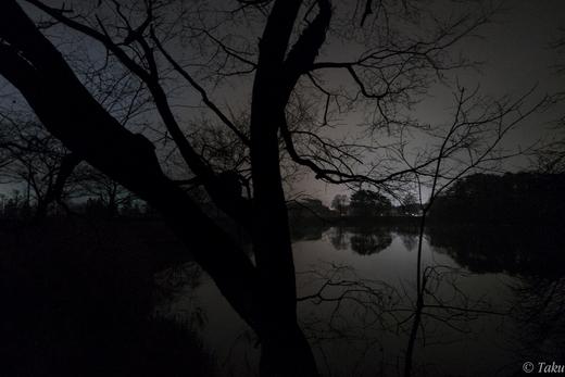 公園の池と冬空と