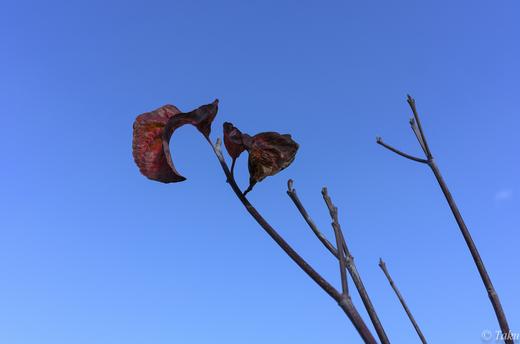 岐阜の空を見上げる