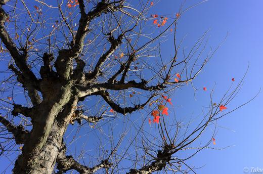 秋は過ぎ去りし初冬の晴れ渡る空