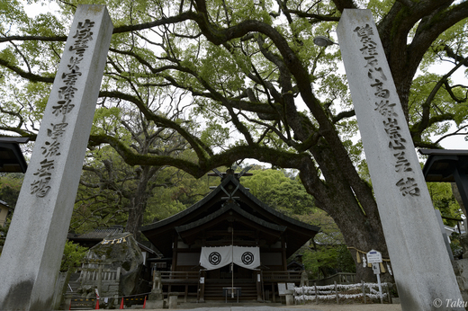 艮神社と大楠の木